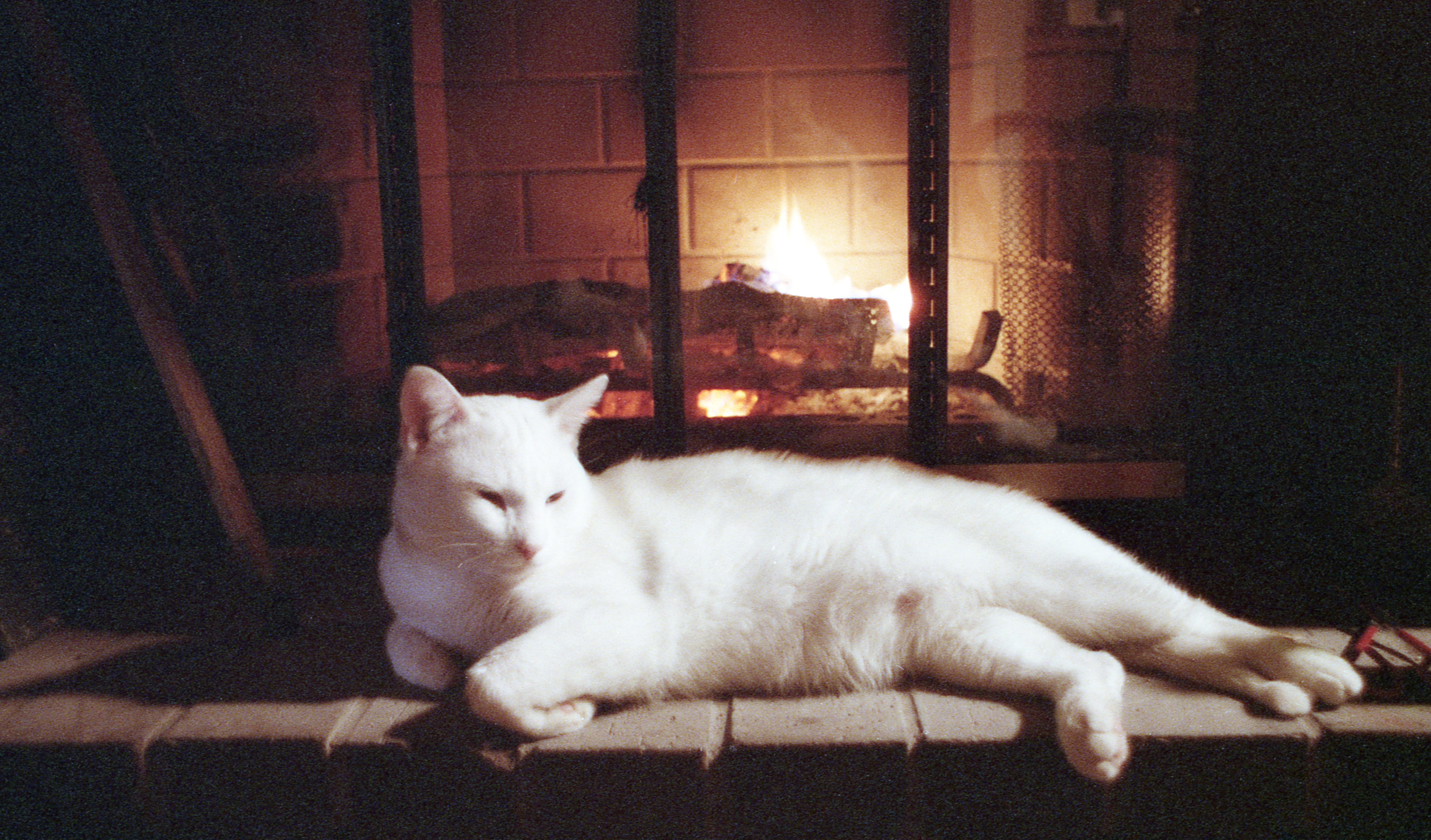 Cat in front of fireplace | Conrad Theodore Seitz