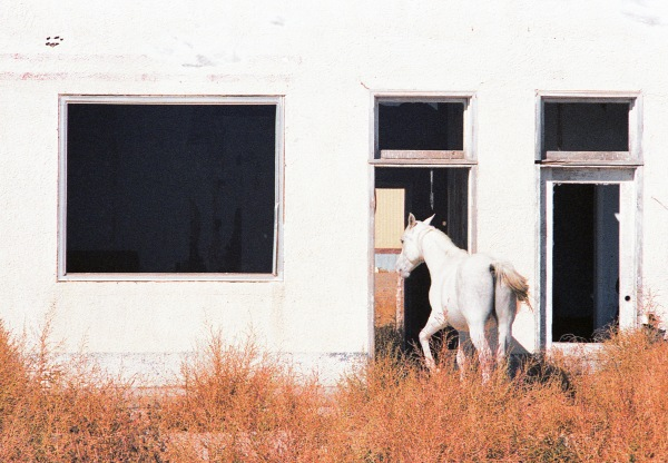 White Horse in a White Ruin